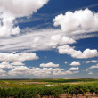 Crops and clouds — Foto Stock