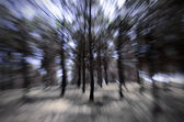 Trees in motion — Stock Photo