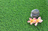 Plumeria and stones on the grass — Stock Photo