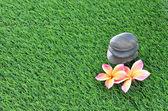 Plumeria y piedras sobre la hierba — Foto de Stock