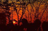 Silhouette trees of sunset in the jungle — Stock Photo