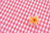 Frangipani flower on red checkered cloth — Stock Photo