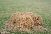 A pile of straw in field — Stock Photo