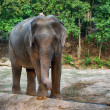 Elephant — Stock Photo #37995069