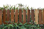 Plant with wooden fencing isolated on white — Stock Photo
