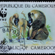 Stock Photo: CAMEROON postage stmap shows Baboon monkeys