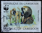 CAMEROON postage stmap shows Baboon monkeys — Stock fotografie