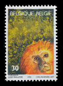 Belgie poštovní známka — Stock fotografie