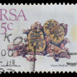 South Africa postage stamp (1988 ) — Stock Photo