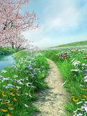 Meadow path — Stock Photo