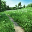Path through a daisy meadow — Stock Photo