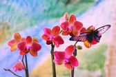BUTTERFLY ON ORCHID — Stockfoto