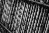 Bamboo china — Stock Photo