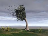 Windswept tree — Stock Photo