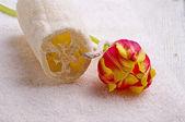 Handdoek en tulip — Stockfoto
