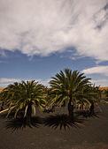 Manzara Antigua — Stok fotoğraf