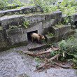 Brown bear in ZOO  — Stock Photo #31320143
