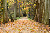 Autumn park alley — Foto Stock