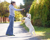 Beautiful woman training dog breed labrador retriever — Stock Photo