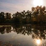 Beautiful Autumn in the park — Stock Photo