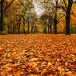 Park in autumn — Stock Photo #33463373