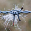 Barbed wire and a piece of fur — Stock Photo