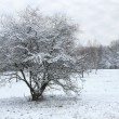 Stock Photo: Lonely snow capped tree