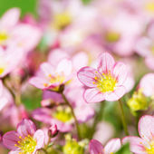 Beautiful spring flowers,floral background — Stock Photo
