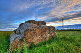 Bales of hay in a field at sunset — Stock Photo
