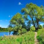 Summer landscape — Stock Photo #26189437