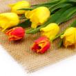 Tulips on matting — Stock Photo #26376827