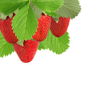 Many strawberries closeup — Stock Photo