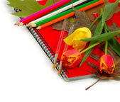 Notebook, flowers, leaves and pencils isolate — Stock Photo