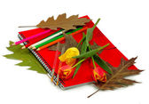 Red notebook and flowers — Stock Photo