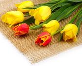 Tulips on the matting — Stock Photo