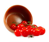 Tomatoes in a bowl isolate — Stock Photo