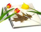 Three tulips and notebook — Stock Photo