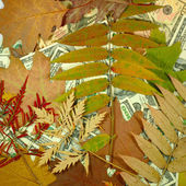 Money and autumn leaves closeup — Stock Photo