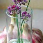 Flowering garlic — Stock Photo