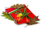 Notebook a květiny — Stock fotografie