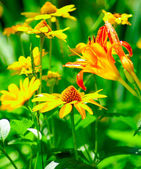 Flowers in the park — Stock Photo