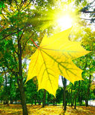 Image of autumn trees in city park — Stock Photo