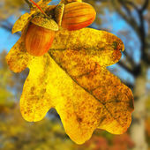 Image of oak leaf in a city park against the autumn trees — Stock Photo