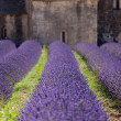 Royalty-Free Stock Photo: Lavender Abbey