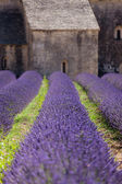 Lavender Abbey — Stock Photo