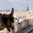 Gargoyle on the top of Notre Dame de Paris Cathedral, Paris, France — Stock Photo