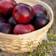 Plum in basket — Foto de Stock