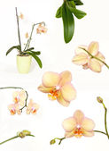 Orchidee-collectie — Stockfoto