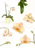 Orkidé samling — Stockfoto