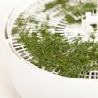 Royalty-Free Stock Photo: Dried dill